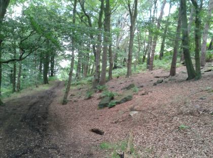 Top of the path in first wood