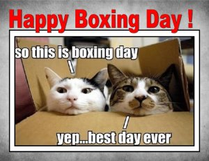Happy-Boxing-Day-Funny-Cats-Meme
